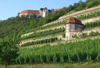 Weinberge und Neuenburg in Freyburg